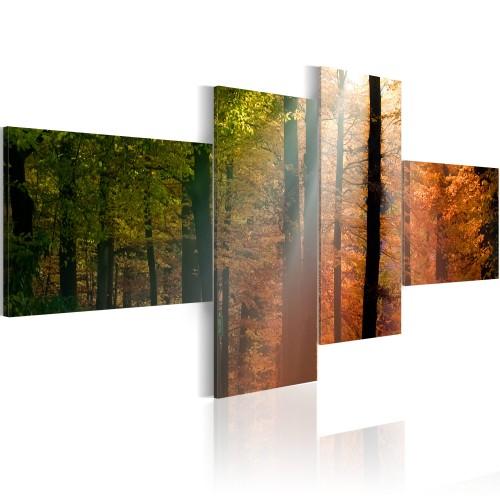 Quadro - Raggi di sole tra gli alberi - Quadri e decorazioni