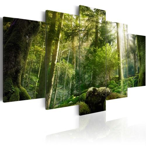 Quadro - Fascino della foresta - Quadri e decorazioni