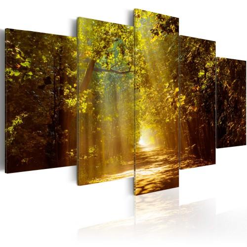 Quadro - Foresta soleggiata - Quadri e decorazioni