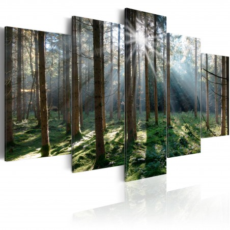 Quadro - Fairytale Forest - Quadri e decorazioni