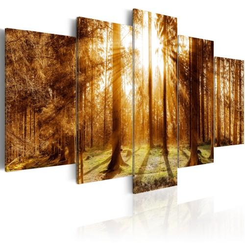 Quadro - Forest Illumination - Quadri e decorazioni
