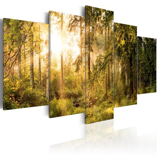 Quadro - Magic of Forest - Quadri e decorazioni
