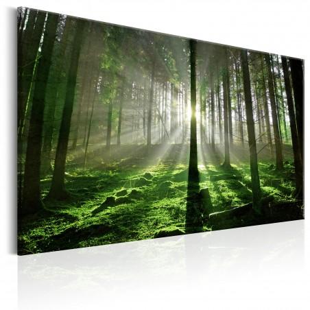 Quadro - Emerald Forest II - Quadri e decorazioni