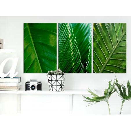 Quadro - Leaves (Collection) - Quadri e decorazioni