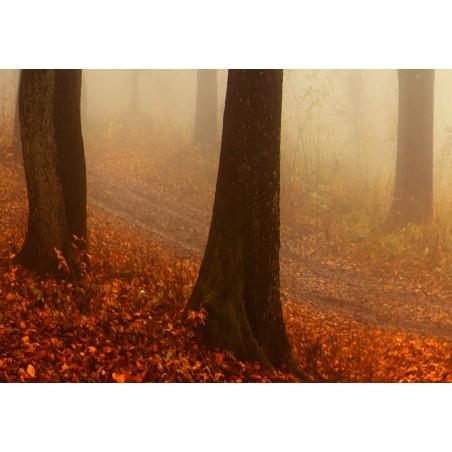 Quadro - Morning Fog - Quadri e decorazioni