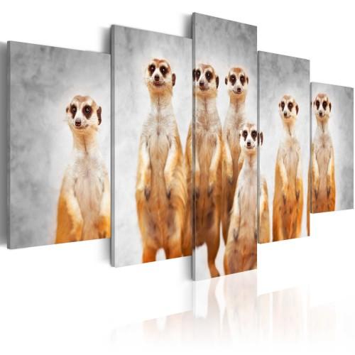 Quadro - Meerkats - Quadri e decorazioni