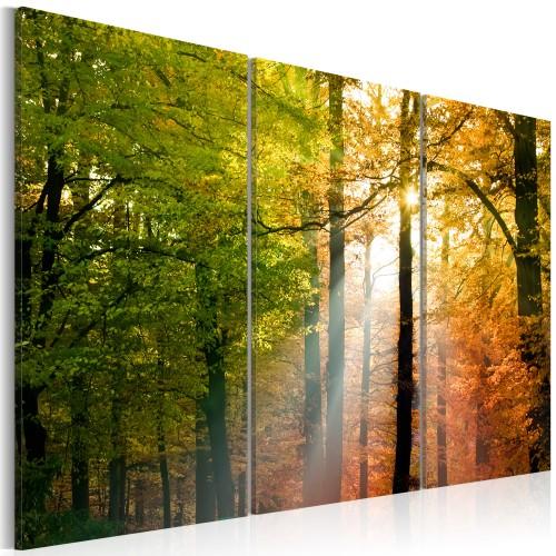 Quadro - Tranquillo bosco autunnale - Quadri e decorazioni