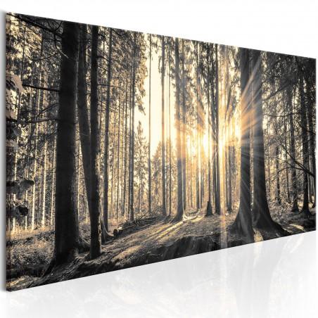 Quadro - Il sole del bosco - Quadri e decorazioni