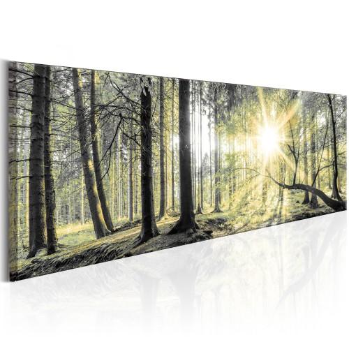 Quadro - Morning Forest - Quadri e decorazioni