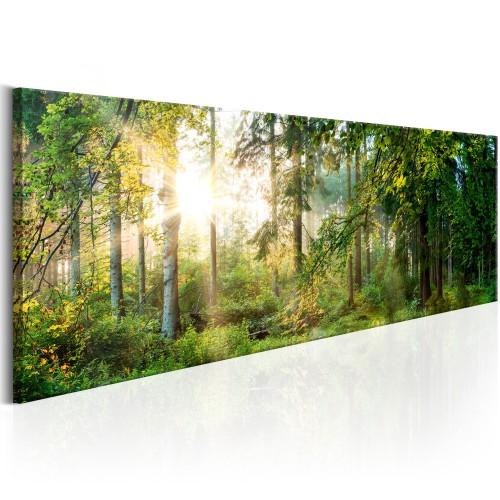 Quadro - Forest Shelter - Quadri e decorazioni