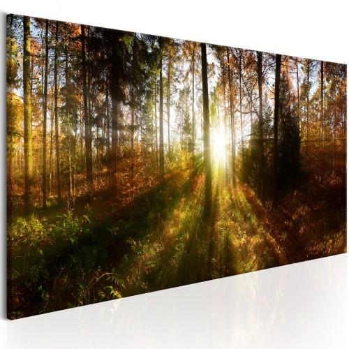 Quadro - Beautiful Forest - Quadri e decorazioni