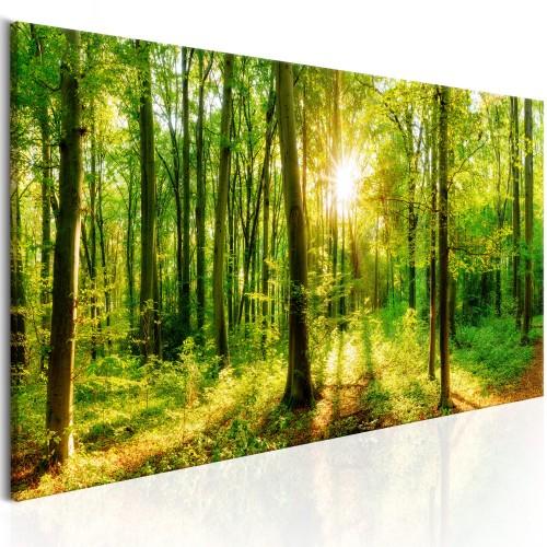 Quadro - Green Magic - Quadri e decorazioni