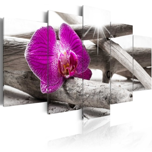 Quadro - Orchid on beach - Quadri e decorazioni