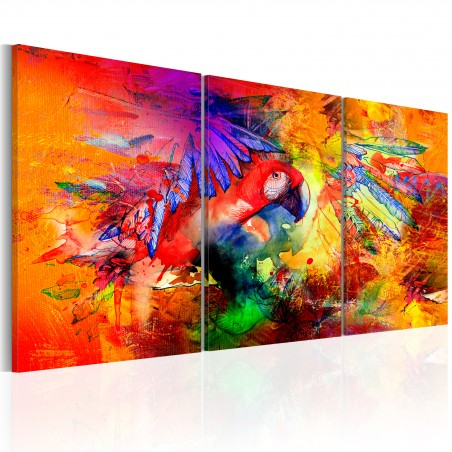 Quadro - Colourful Parrot - Quadri e decorazioni