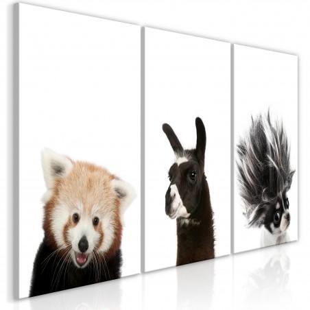 Quadro - Friendly Animals (Collection) - Quadri e decorazioni