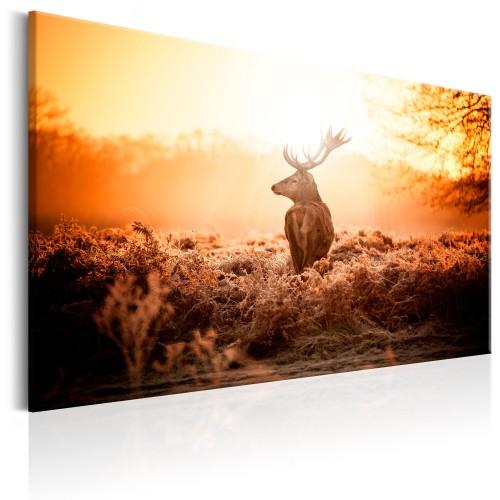 Quadro - Deer in the Sun - Quadri e decorazioni