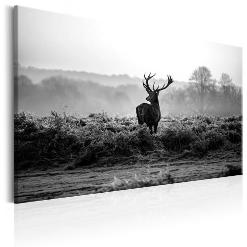 Quadro - Deer in the Wild - Quadri e decorazioni