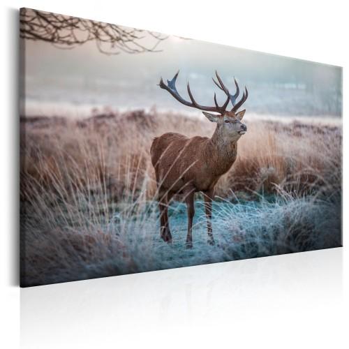 Quadro - Wild Animal - Quadri e decorazioni