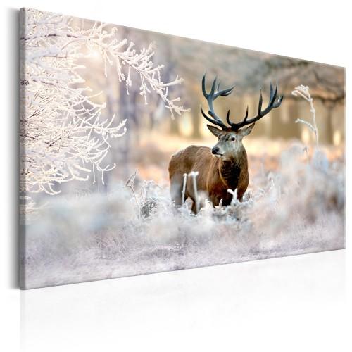 Quadro - Deer in the Cold - Quadri e decorazioni