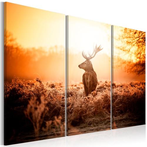 Quadro - Deer in the Sun I - Quadri e decorazioni