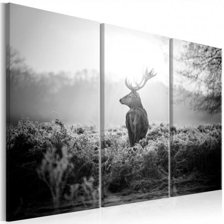 Quadro - Black and White Deer I - Quadri e decorazioni