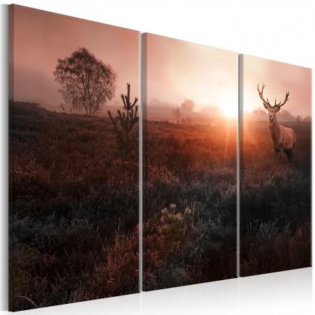 Quadro - Deer in the Sunshine I - Quadri e decorazioni