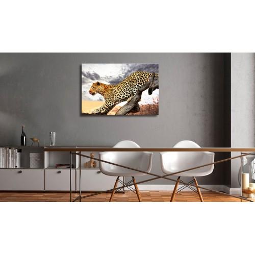 Quadro - Predatory Stare - Quadri e decorazioni