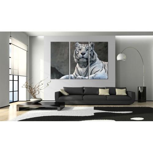 Quadro - Tigre bianca - Quadri e decorazioni