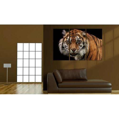 Quadro - Tigre predatrice - Quadri e decorazioni