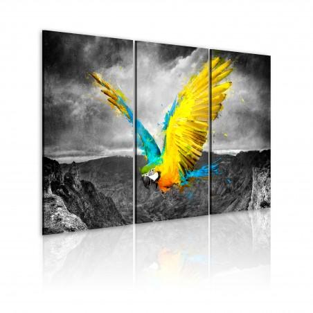 Quadro - Uccello paradisiaco - Quadri e decorazioni