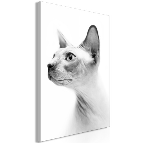 Quadro - Hairless Cat (1 Part) Vertical - Quadri e decorazioni