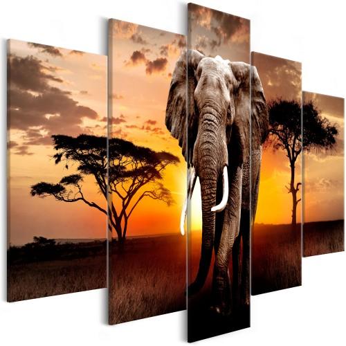 Quadro - Wandering Elephant (5 Parts) Wide - Quadri e decorazioni
