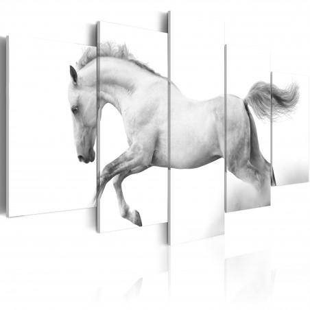 Quadro - Cavallo: passione e liberta' - Quadri e decorazioni