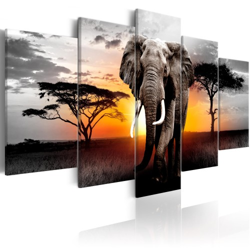 Quadro - Elephant at Sunset - Quadri e decorazioni