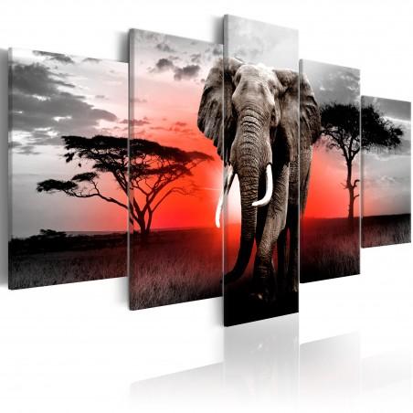 Quadro - Lonely Elephant - Quadri e decorazioni