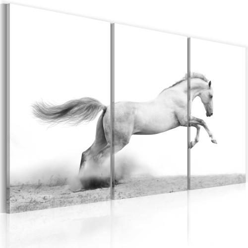 Quadro - Cavallo al galoppo - Quadri e decorazioni