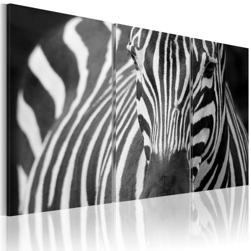 Quadro - Signora zebra - Quadri e decorazioni