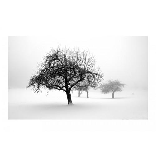 Fotomurale - inverno - alberi - Quadri e decorazioni