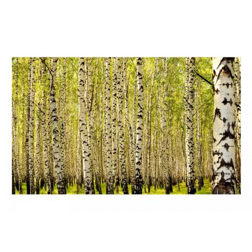Fotomurale - Foresta di betulle - Quadri e decorazioni