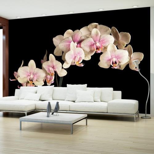 Fotomurale - Orchidea in fiore - Quadri e decorazioni