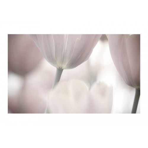 Fotomurale - Tulips fine art - black and white - Quadri e decorazioni