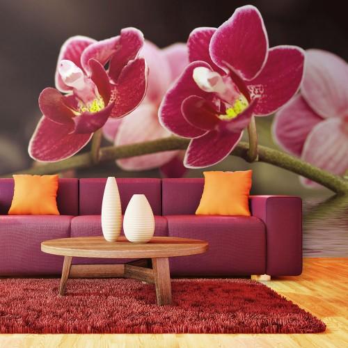 Fotomurale - Fiori d'orchidea riflessi nell'acqua - Quadri e decorazioni