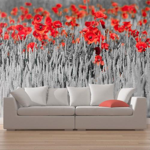 Fotomurale - Papaveri rossi in un campo bianco e nero - Quadri e decorazioni