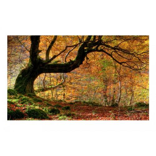 Fotomurale - Autunno, bosco e foglie - Quadri e decorazioni