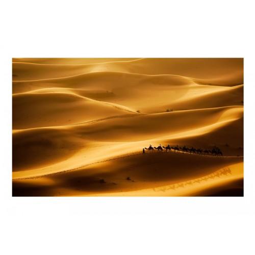 Fotomurale - Carovana di cammelli - Quadri e decorazioni