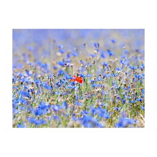 Fotomurale - Prato di fiordalisi nel colore del cielo - Quadri e decorazioni