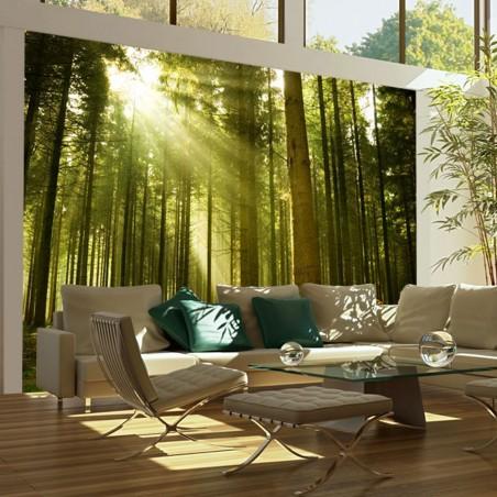 Fotomurale - Foresta di pini - Quadri e decorazioni