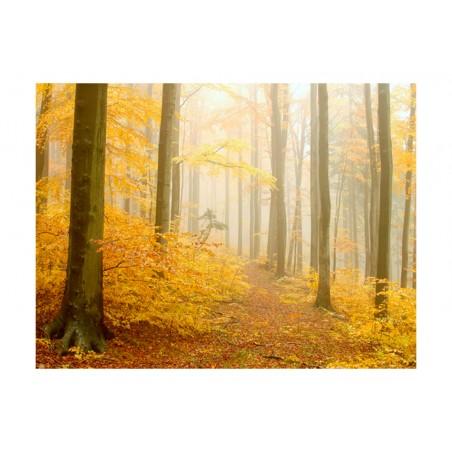 Fotomurale - bosco - autunno - Quadri e decorazioni