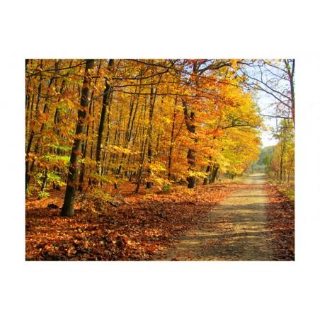 Fotomurale - Beech forest - Quadri e decorazioni