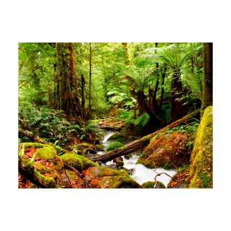 Fotomurale - Foresta equatoriale - Quadri e decorazioni